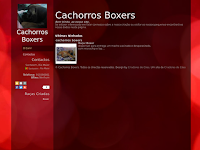 Canil cachorros boxers